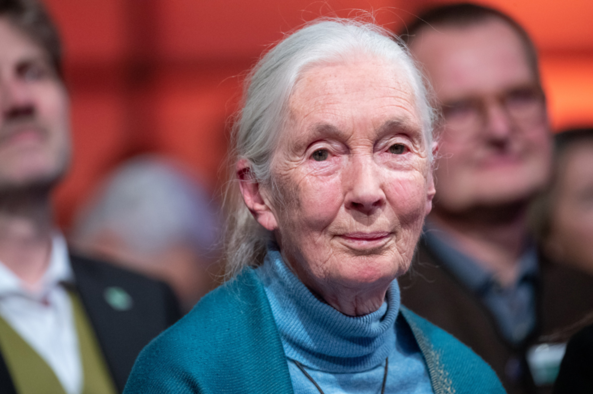 Jane Goodall answers questions with Pierce Brosnan for ...