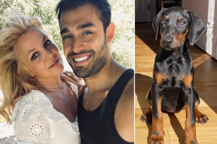 Britney Spears' fiancé Sam Asghari surprises star with adorable puppy