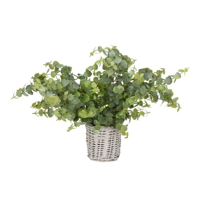 Eucalyptus in basket