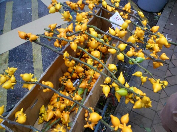 Chinese New Year yellow fruit at the flower market in Hong Kong