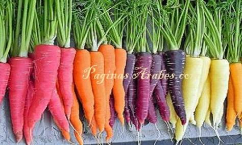 Zanahoria De Colores : Es la hortaliza más importante y de mayor consumo de la familia.