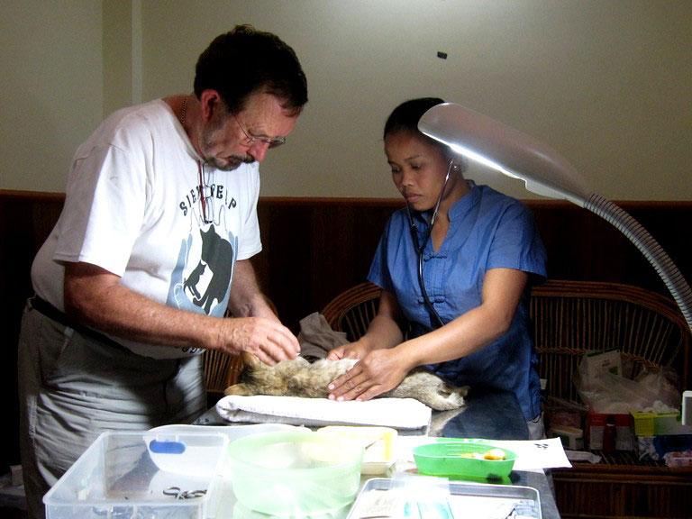 Pagoda Cats Siem Reap - Getting Vets' help
