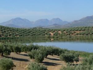 aceite de oliva de jaen