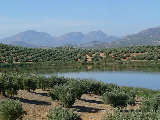 Aceite de oliva de Jaén: Excelente zumo de aceituna