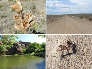 Southeast wallpaper - Colorado Reservoir, Road, Dried Plant and Ant Hill
