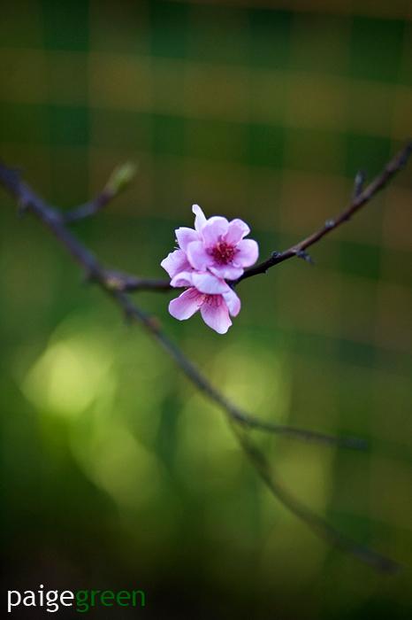 paigegreen-blossom-308-9024-web.jpg