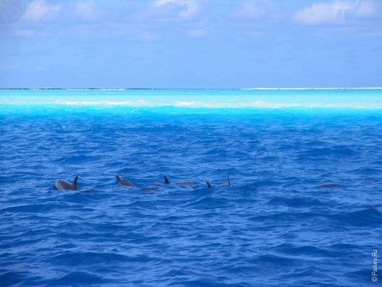 Фото дельфинов в Лаккадивском море