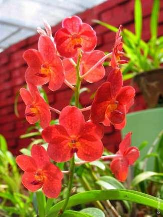 Цветы в Перадения Шри Ланка