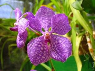 Растения Шри-Ланки