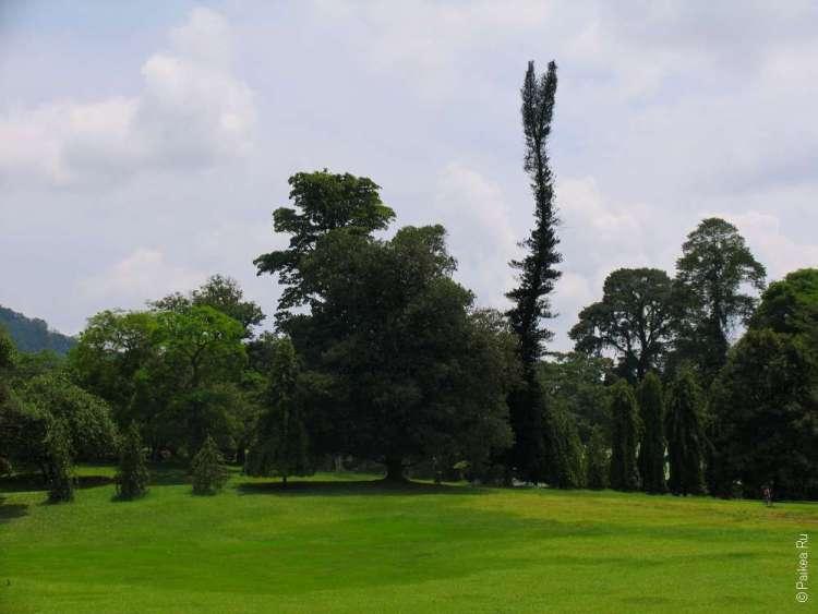 Перадения знамениа пьяными елками