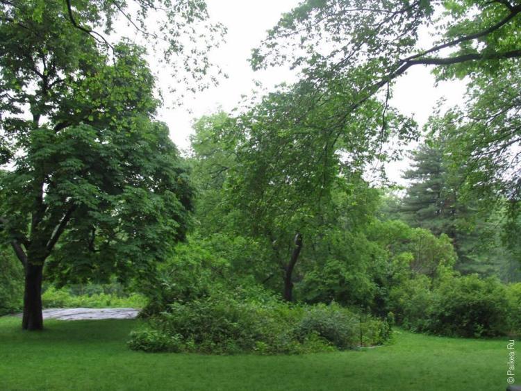 нью-йорк деревья в центральном парке