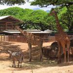 Зоопарк Гонолулу Гавайи