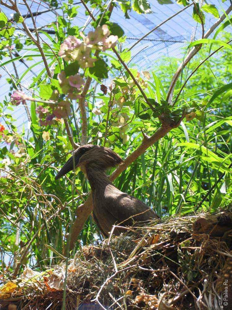зоопарк гонолулу (honolulu zoo), птица на ветке