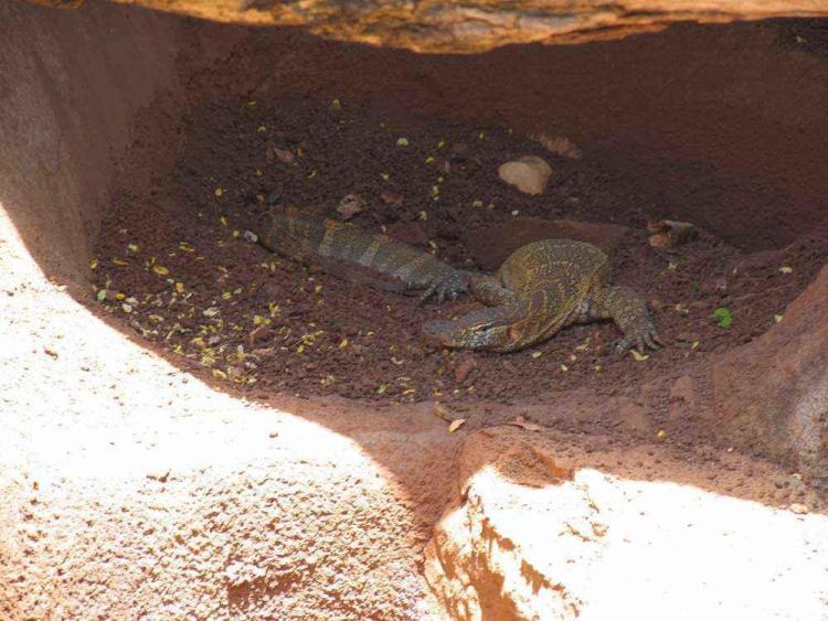 зоопарк гонолулу (honolulu zoo), крокодил