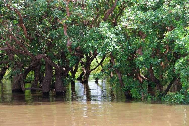 Мангровые леса в камбодже