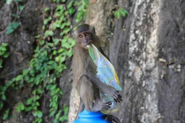 обезьяна с пластиковой бутылкой