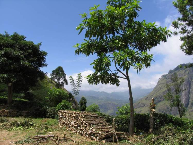 Элла Шри Ланка природа