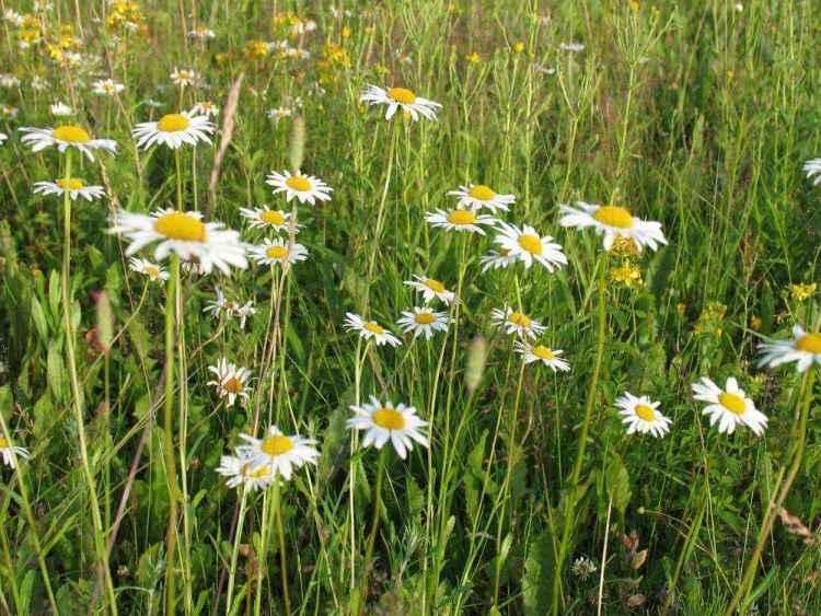 цветы в сыктывкаре