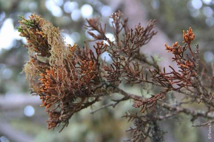 Ветки деревьев и мох
