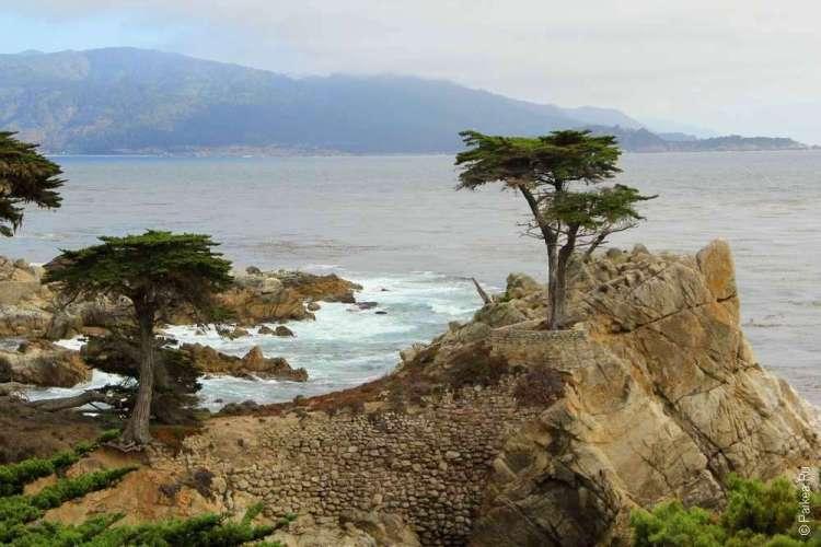 17-мильная дорога в Калифорнии / Кипарис на скале на фоне океана