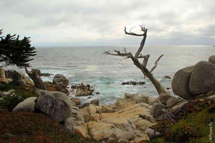Фигура кипариса на фоне океана