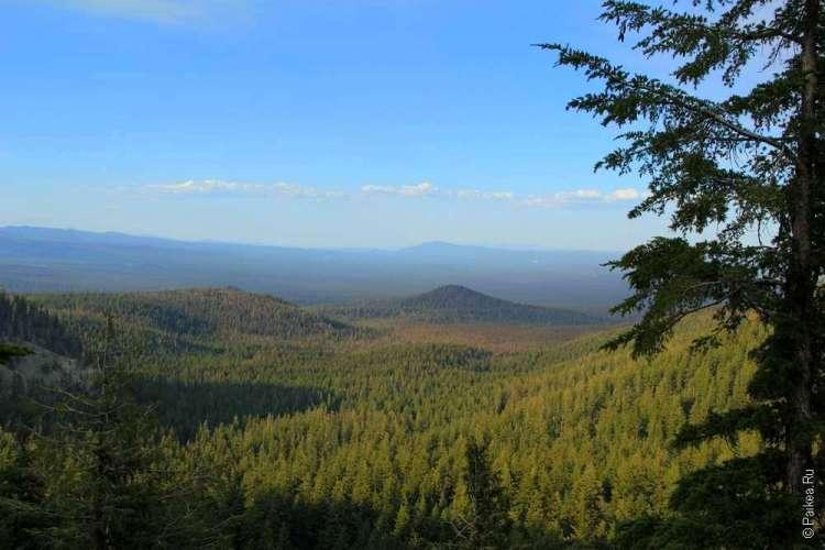 Холмы, покрытые деревьями