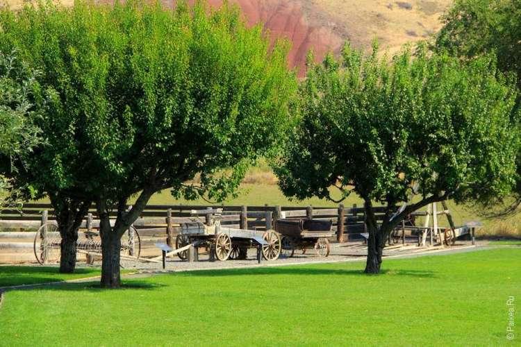 Яблони и зеленая лужайка на ферме