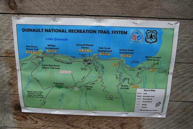 Дождевой лес в национальном парке Олимпик - Трейлы у озера Квинолт