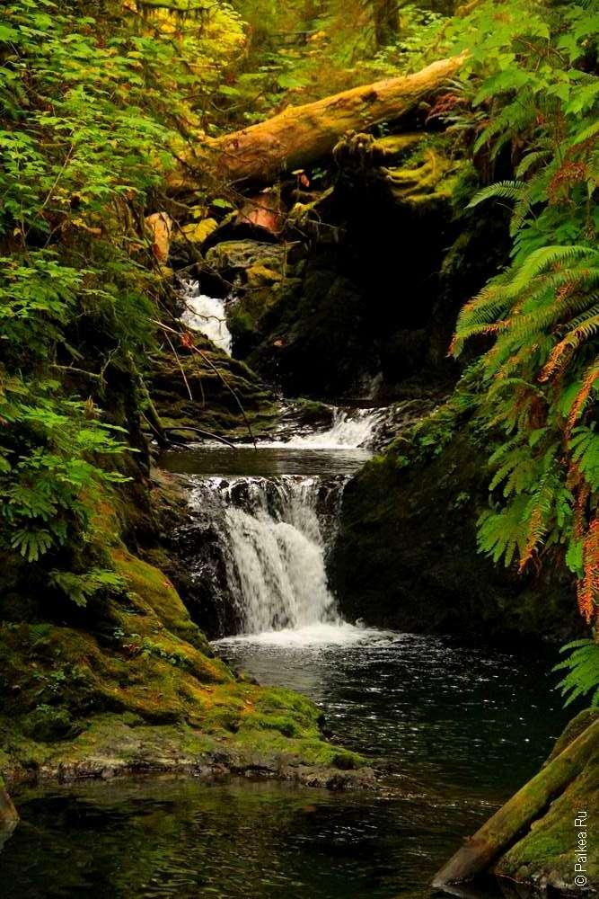 дождевой лес в национальном парке олимпик 03