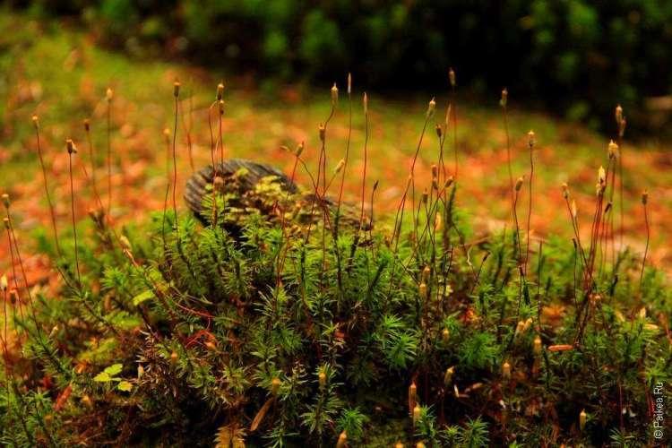 фото из дождевого леса