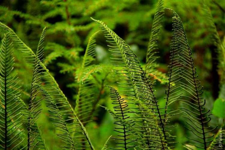дождевой лес в национальном парке олимпик 10