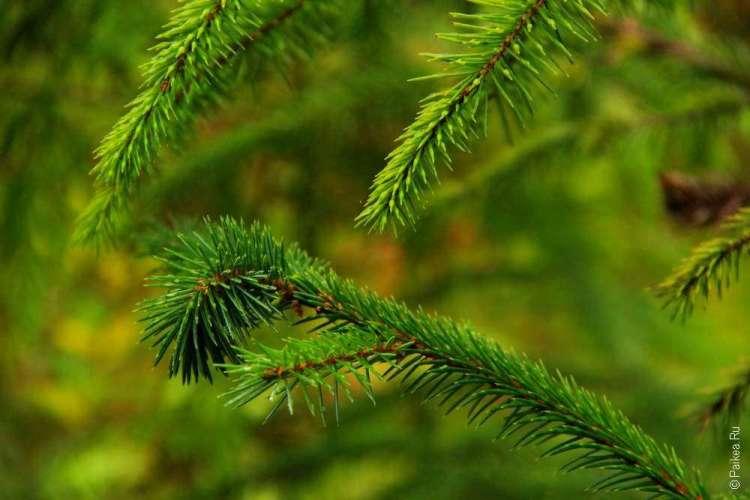 дождевой лес в национальном парке олимпик 12