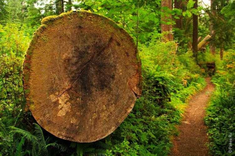 дождевой лес в национальном парке олимпик 16