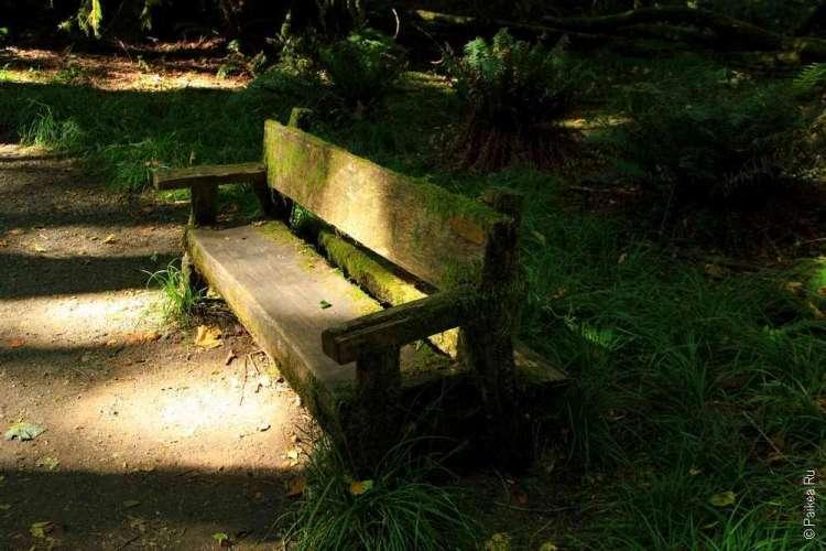 Озеро Полумесяца - Старая скамейка в лесу