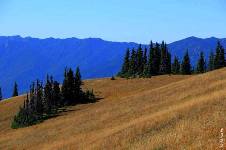 горные леса и луга в парке олимпик