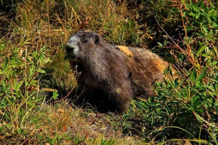 Диких животных в национальных парках кормить запрещено