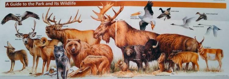 Животные и птицы в Йеллоустоуне