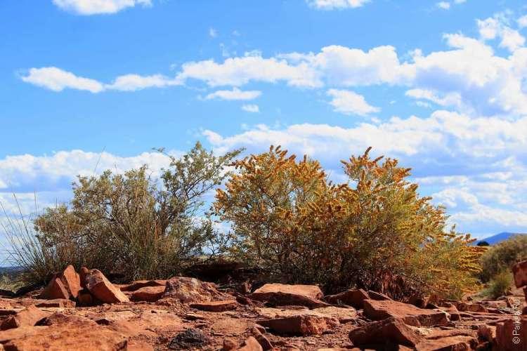 Вупатки Аризона