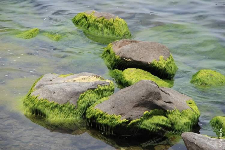 Озеро Титикака 9