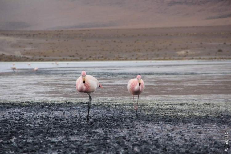 Альтиплано, Боливия (Altiplano, Bolivia)