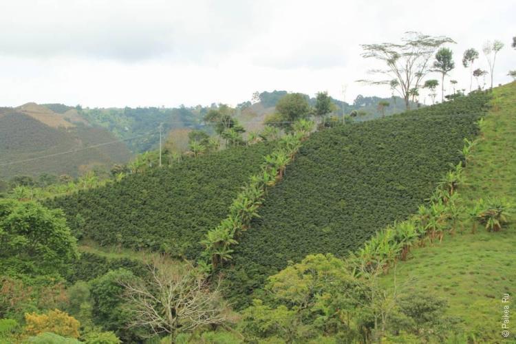 Саленто, Колумбия (Salento, Colombia)