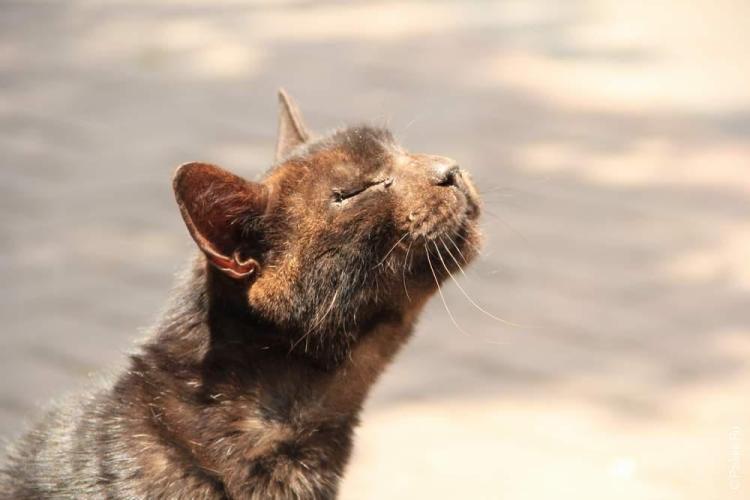 Солнцем наслаждаются даже коты