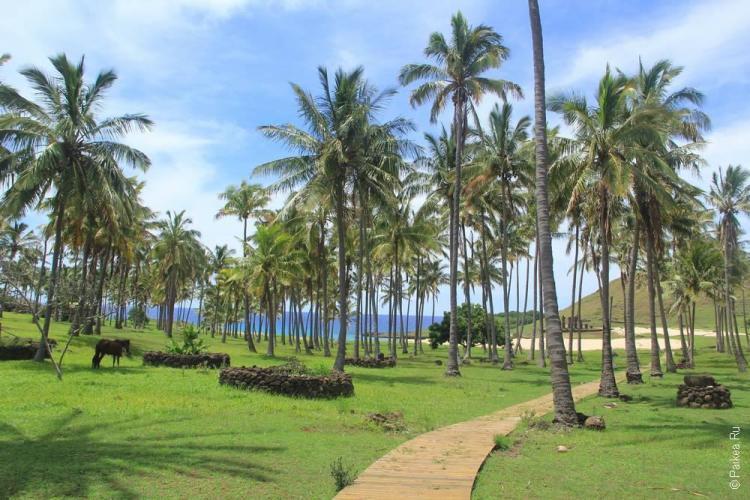 Пляжи острова Пасхи это