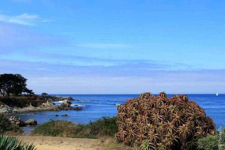 Куст у берега