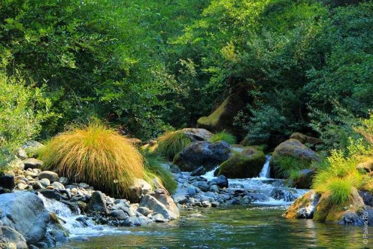 Пороги ручья в лесу Рэдвуд хайвэй