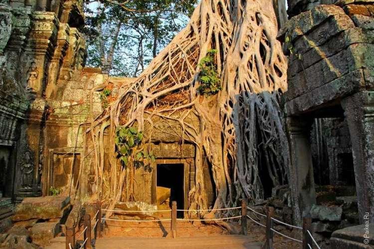 Деревья и храм Та Пром