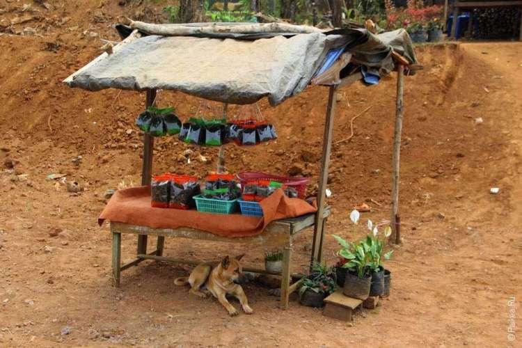 Небольшой чайный магазинчик в Лаосе