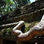 храмы ангкора - та пром
