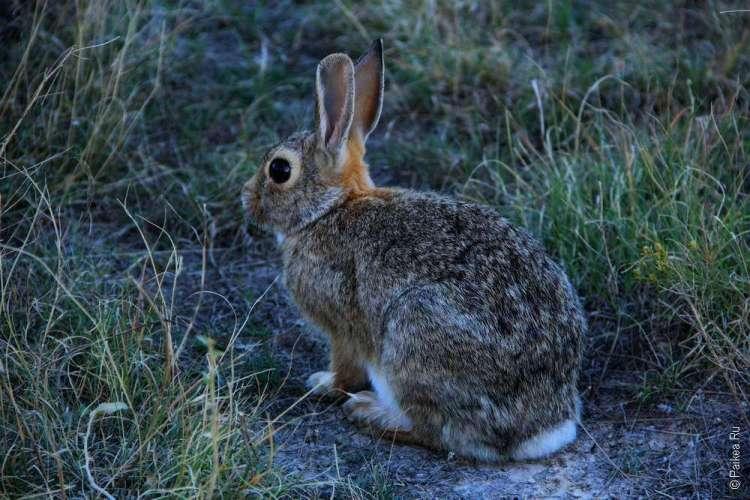 Национальный парк Бэдлендс, Южная Дакота, США 08
