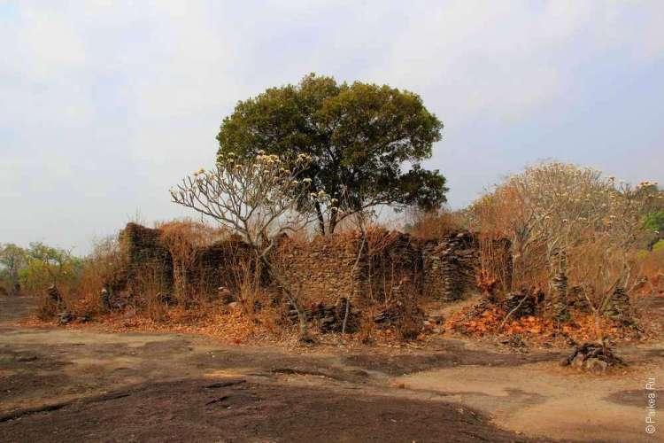Дерево в руинах